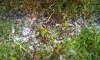 В Ленобласти выпал первый снег
