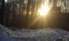 В Южно-Приморском парке нашли труп молодого петербуржца
