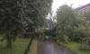 Дорожники Петербурга обещают быстро убирать поваленные деревья