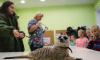 Пони и сурикат познакомили петербургских школьников с профессией ветеринар