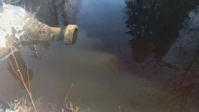 Росприроднадзор обвинил коммунальщиков Всеволожского района в загрязнении Охты