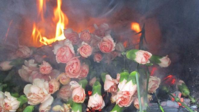 В Петербурге сожгли 400 заражённых трипсом гвоздик