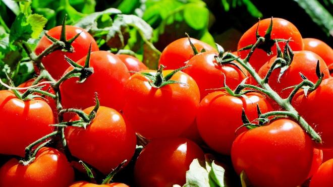 В Минсельхоз поступило предложение о временном ограничении импорта томатов в РФ