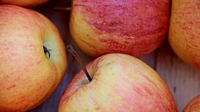В Ленинградской области уничтожили 600 килограммов капусты и яблок