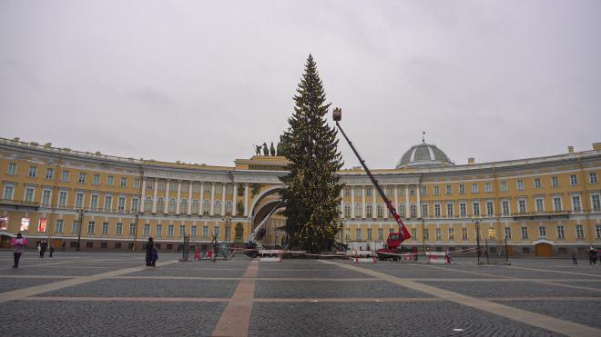 Петербургская елка стала самой дорогой среди семи городов-миллионников России