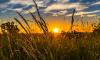 Аграрии Выборгского района обсудили с губернатором планы на весну