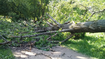Петербургские садовники оперативно убрали с улиц все ветровальные деревья