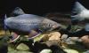 Рыбоохрана Ленобласти просит не мешать метать икру лососю и форели