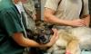 """Экс-сотрудники ветеринарного центра """"Белый Аист"""" сообщили о рейдерском захвате"""