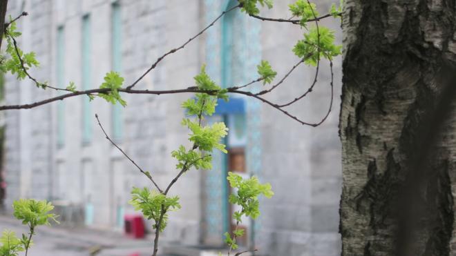 Жителей Ленобласти обнадежили возможным потеплением на майские праздники