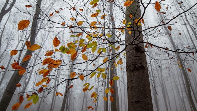 Ленобласть вошла в топ-5 регионов по эффективному управлению лесами