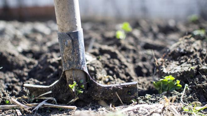 К лету в садоводствах Петербурга откроются новые медпункты и передвижные амбулатории