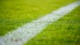Служебные собаки разрыли футбольное поле стадиона ...