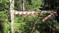 Части человеческого скелета нашли петербуржцы во время л...