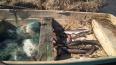 В Ленобласти пресечена незаконная рыбалка в период ...