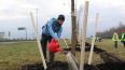 Смольный научит петербуржцев правильно сажать деревья ...