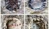 Палеонтологи показали, как выглядели древние обитатели Петербурга