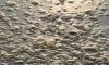 Водоемы и пляжи Петербурга загрязнены микропластиком