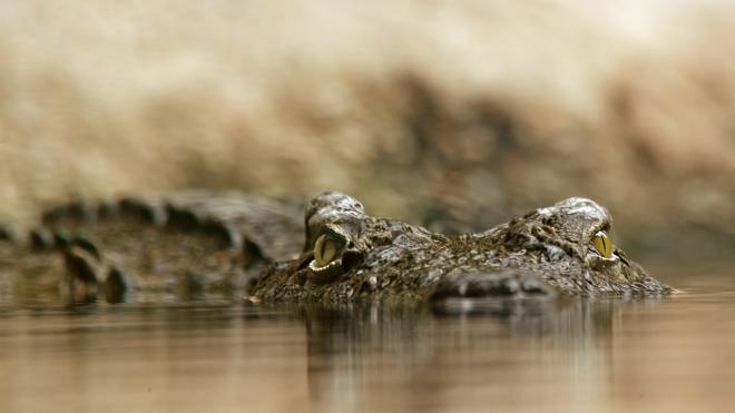 На Алтае браконьер выловил из реки крокодила