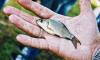 Более 100 человек оштрафовали в мае за незаконную рыбалку в Финском заливе