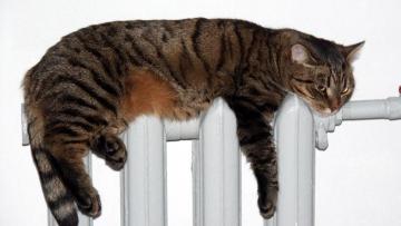 Жилищный комитет: отопление включено во всех домах Петербурга, но не во всех квартирах