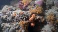 У побережья Италии на глубине 55 метров нашли уникальные ...