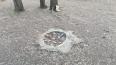 В Запорожье в парке деревянная скульптура упала и ...