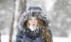 Начало рабочей недели будет в Петербурге снежным и теплым