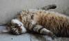 В Италии кот получил в наследство 30 тысяч евро от умершей хозяйки