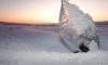 В Петербурге в годовалого ребенка кинули глыбой льда: мальчик госпитализирован с травмой головы