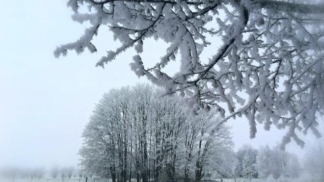 Водителей Ленобласти предупредили о мокром снеге и гололедице