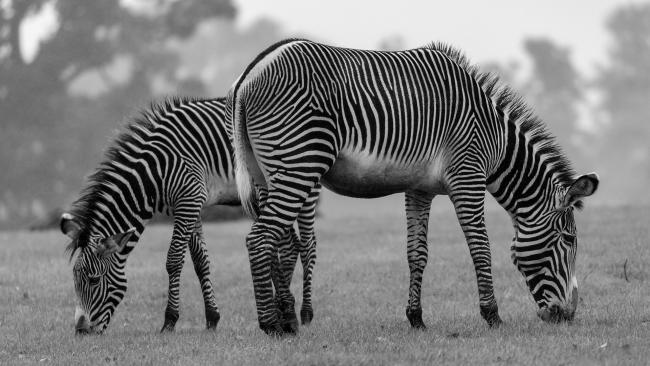 Правительство РФ решило выделить 239 млн руб частным зоопаркам и циркам