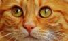 В выходные Петербуржцы отметят  традиционный день эрмитажного кота
