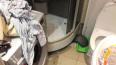 Житель Минска убил кота, сломав его пополам (18+)
