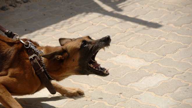 Двухлетнего малыша в Вихоревке загрызли собаки
