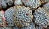 Ботаник-наркодилер попался на выращивании галлюциногенных кактусов