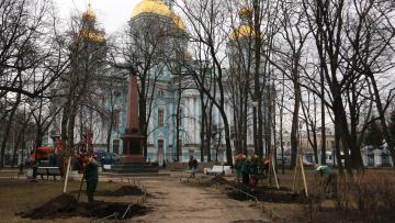 Северную столицу украсят молодые деревья
