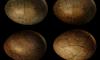 Петербургские ученые впервые дали имя яйцу динозавра