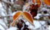 МЧС: ночью в Петербурге температура опустится ниже нуля