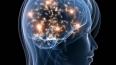 Американские ученые: женский мозг не создан для похудени...