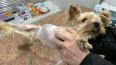 Петербуржцы спасли болеющую собаку, которую выкинули ...