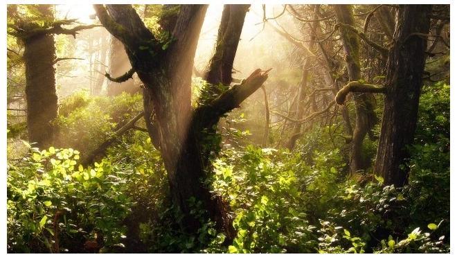 В пригороде Петербурга упавшее дерево убило подростка