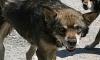 В Крыму стая бродячих собак загрызла девушку