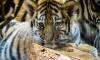 Продавцов и покупателей редких диких животных могут посадить в тюрьму