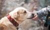 В Петербурге проведут благотворительный забег с собаками