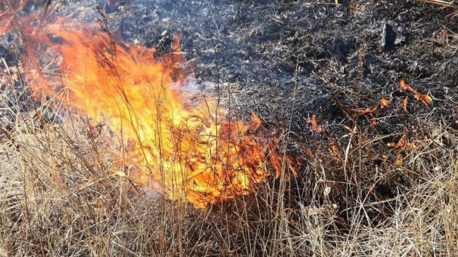 В Ленобласти ожидается повышенный уровень пожароопасности