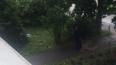 На газоне у дома на Трамвайном нашли труп