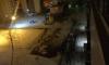На Шлиссельбургском проспекте около школы прорвало трубу с кипятком