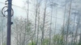 Очевидцы: в Кировском районе загорелся лес
