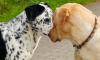 На Урале раскрыли организацию, массово уничтожающую собак